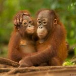 Суд в Нью-Йорке не дал шимпанзе человеческие права