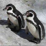 Интересные факты: Пингвины не имеют вкуса к сладкому, выяснили ученые