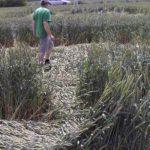 В Ростовской области обнаружили странное поле