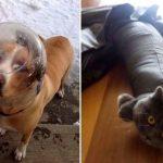 Проснулся и увидел это! Люди делятся смешными и милыми фото своих животных