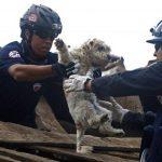 11+ трогательных фотографий спасения животных, которые попали в беду