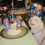 20 самых счастливых и улыбающихся животных, которых засняли на камеру