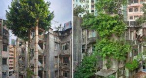 20 примеров, где природа победила цивилизацию