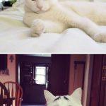 12 котов с безумным окрасом шерсти, которые сделают ваш день
