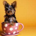 12 самых маленьких пород собак