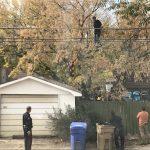 В Канаде полиция снимала преступника с дерева 4 часа, но он слез, чтобы поесть тако