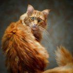 20 лучших фотографий котиков, ради которых и был создан Интернет