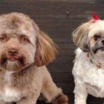 Эта собака напугала весь Интернет, потому что у нее человеческое лицо!