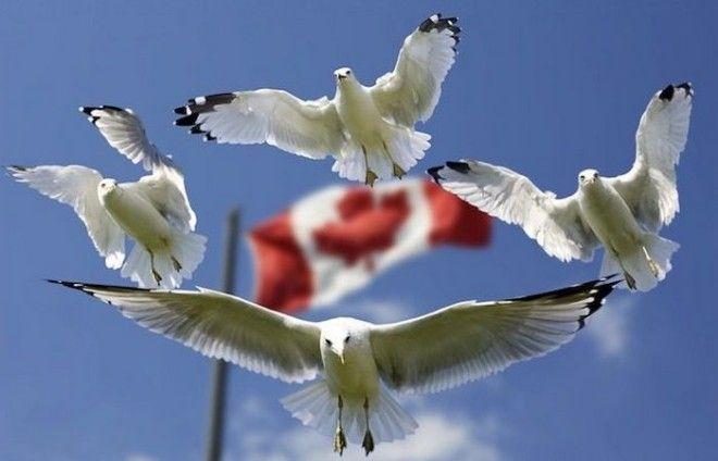 Гостеприимная Канада