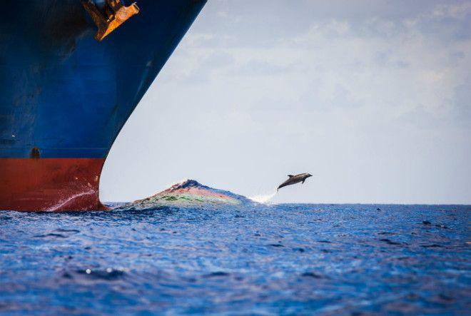 Реактивный дельфин на взлете