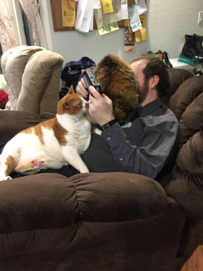 Ревнивые коты атакуют