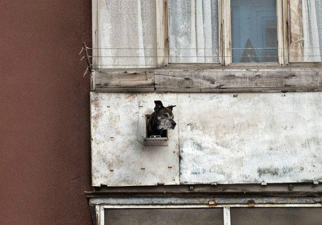 Окно для собаки