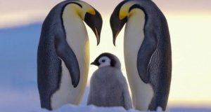 rp_penguins02_tumb_660.jpg